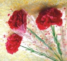 康乃馨中枝花 套袋